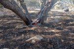 مهار آتش سوزی در چاروسا+تصاویر