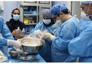 اولین پیوند موفقیت آمیز قلب در خوزستان انجام شد